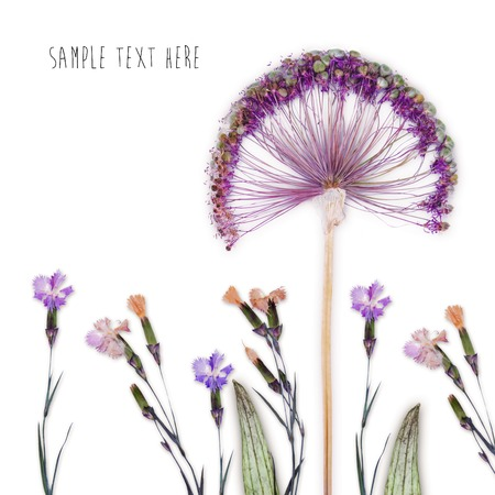 Pressed and dried flowers background Stock Photo