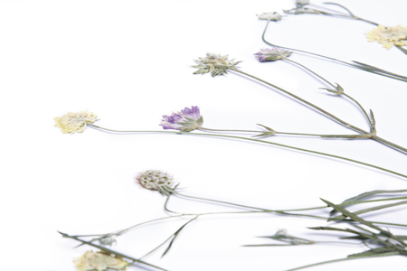 Pressed and dried summer flower