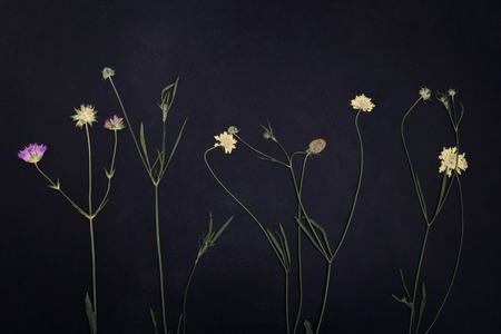 Pressed and dried summer spring flowers