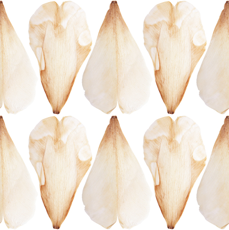 Pressed and dried tulip flower petal on a white background pattern. For use in scrapbooking