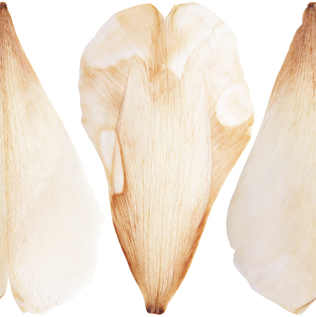 Pressed and dried tulip flower petal on a white background pattern. For use in scrapbooking Stock Photo