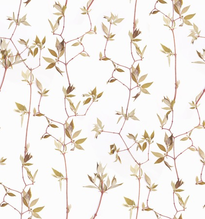 Herbs branch floral on white bacground pattern