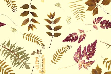 Branche d'herbes floral sur motif de fond jaune Banque d'images