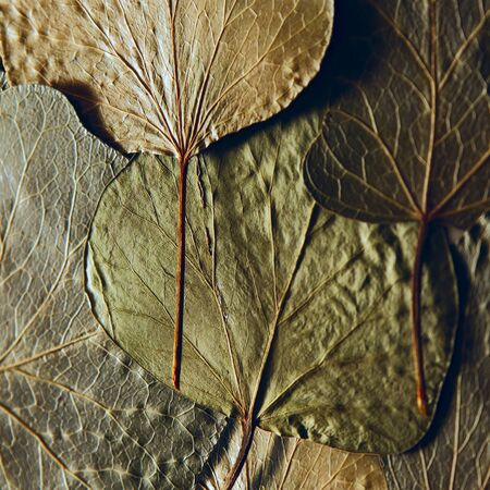 Pressed and dried leaves summer autumn flowers herbs background