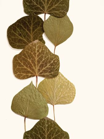 Pressed and dried leaves summer autumn flowers herbs pattern isolated with blank space. For use in scrapbooking floristry or herbarium.