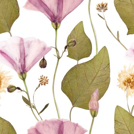 Pressed and dried spring summer wild flower pattern on white background