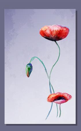 poppy flowers: Watercolor poppy flowers card.