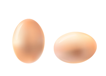 laying egg: Vertical and horizontal egg illustration.