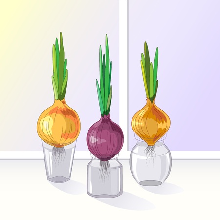 window sill: Spring onions in glass jars on window sill , healthy food, spring concept.