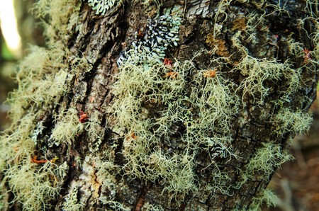 tierra: A close-up of a tree in the Tierra del Fuego National Park. Stock Photo