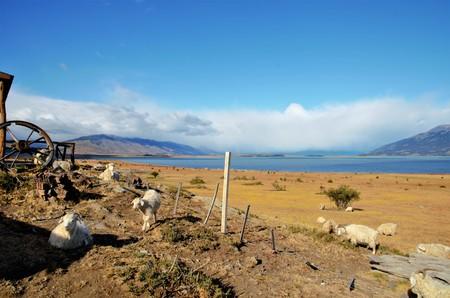 plan éloigné: Long shot moutons à estancia en Argentine près de El Calafate avec des collines en arrière-plan