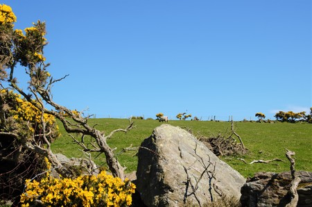 Mull: Close up of Sheep grazing on the headland Torr Head in the County Antrim in Northern Ireland, UK