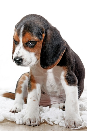 sulky: puppy dog with attitude