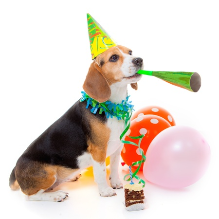 party balloons: dog party animal celebrating birthday or anniversary