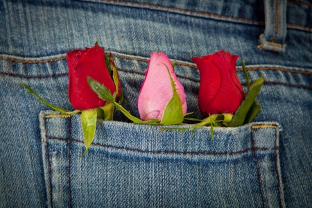 roses in pocket for valentines day concept photo