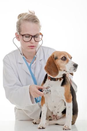 veterinarian examining pet dog photo