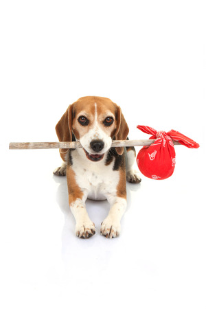 belongings: concept for runaway dog , pets holiday kennels  home or lost animal Stock Photo
