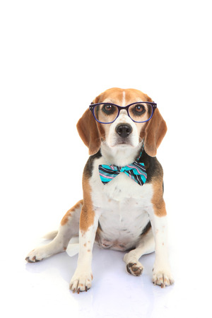 bowtie: concept for businnes pet or dog intelligence training