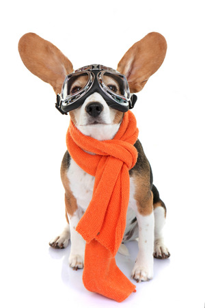 Concept voor reizen of vakantie huisdier aviator Stockfoto - 29277810