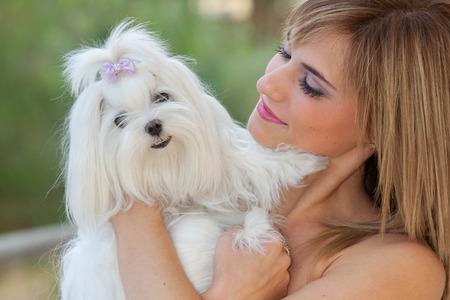 lapdog: owner holding pet lapdog,  maltese Stock Photo