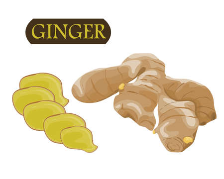 isolate ginger and ginger slice on white background drawing vector illustration