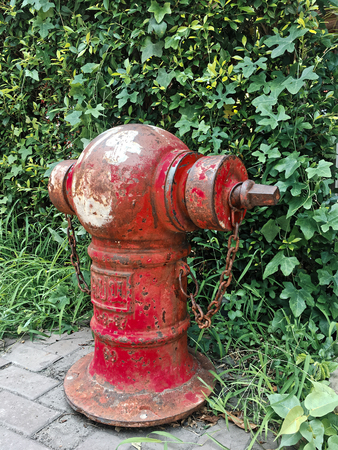 The old red water hydrant with tree wall background Stock Photo