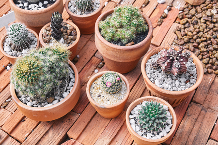 Mixed of mini cactus, succulent plants in brown cray pot on bricks brown background, Top view.