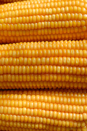 subsistence: sweet corn Stock Photo