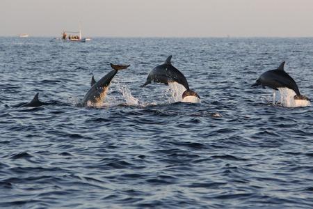 Observation de dauphins sur la plage de Lovina à Bali, Indonésie
