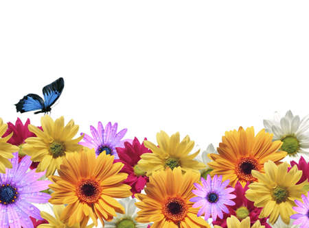 Background of flowers photo
