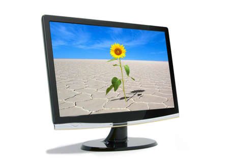 Sunflower on lcd monitor