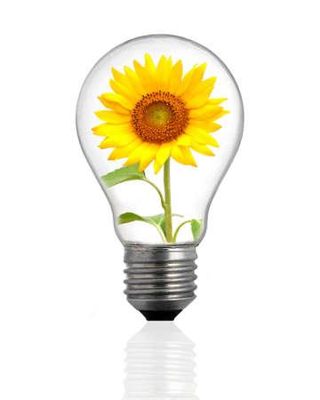Ecological lamp photo