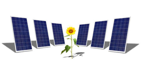 Solar panels and sunflower photo