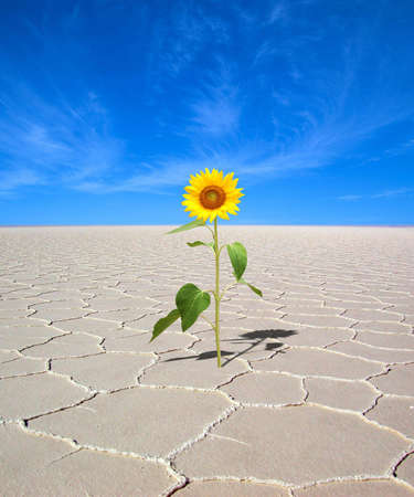 Hermit sunflower Stock Photo - 5495327