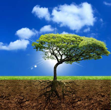 plant with roots: Ra�ces de la vida