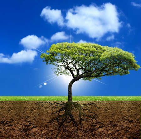 racines: Racines de la vie. Banque d'images