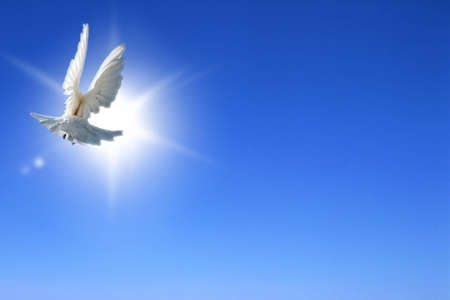 christian symbol: Doves of the peace