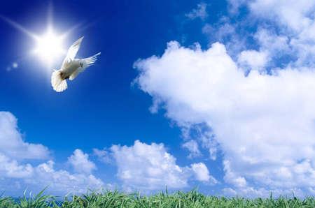 Dove of the peace Stock Photo