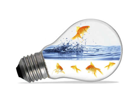 Small red fishes swim in a lamp