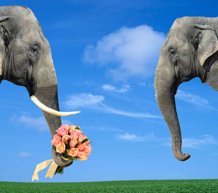 Two elephants to the first appointment.