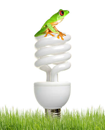 whit: Eco bulb: a fluorescent bulb whit little red eyes frog.