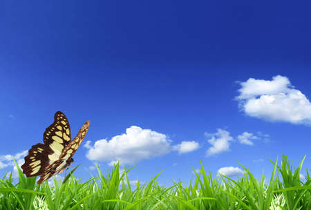 Nature background: brown butterfly on green grass.