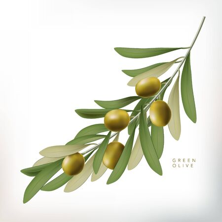Vector Classic Style 3D Illustration Green Olive with Leaves