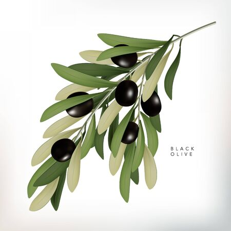 Vector Classic Style 3D Illustration Black Olive with Leaves Illustration