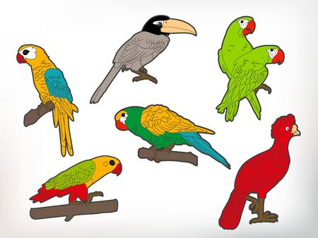 Vector Parrots or Birds Illustration Collection