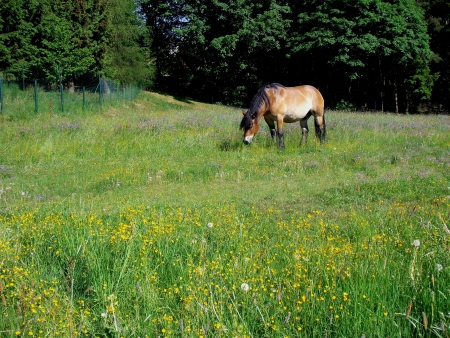 A cold blood is grazing on a colorful field of flowers Stock Photo - 17073844