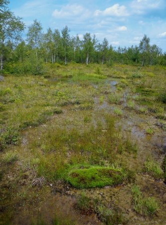 a wild and romantic upland moor landscape  raised bog  in a nature reserve with birch forest in the background, in the Thuringian forest, a German low mountain range Stock Photo - 17218362