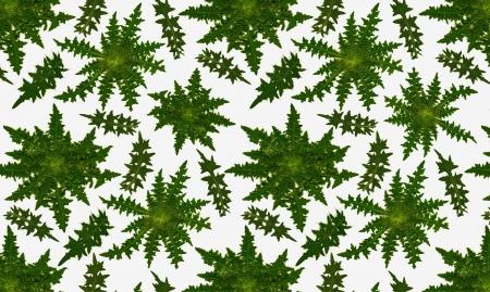 escarapelas: Un patr�n de rosetas completas y hojas de la Cirsium cardo com�n Se puede colocar entre s� arbitrariamente Foto de archivo