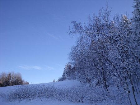 Winter Landscape with hoarfrost and snow-covered trees and shrubs photo