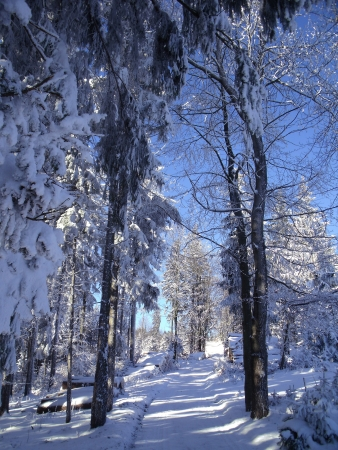 Trail in the snowy forests in the low mountain photo